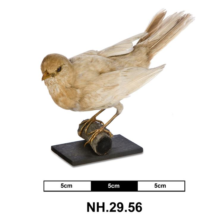 General view of whole of Horniman Museum object no NH.29.56