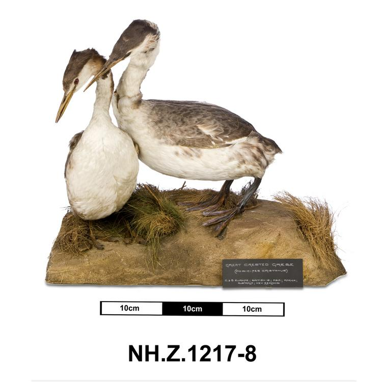 General view of whole of Horniman Museum object no NH.Z.1217