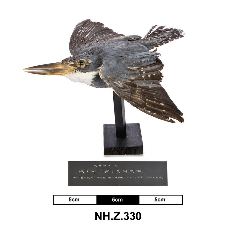 General view of whole of Horniman Museum object no NH.Z.330