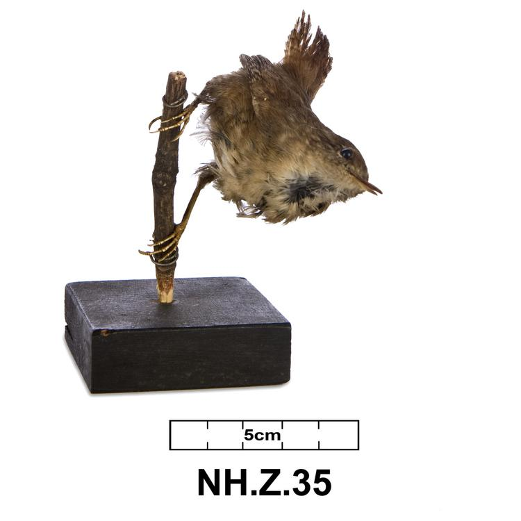 General view of whole of Horniman Museum object no NH.Z.35