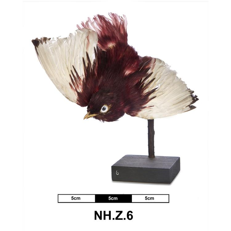 General view of whole of Horniman Museum object no NH.Z.6