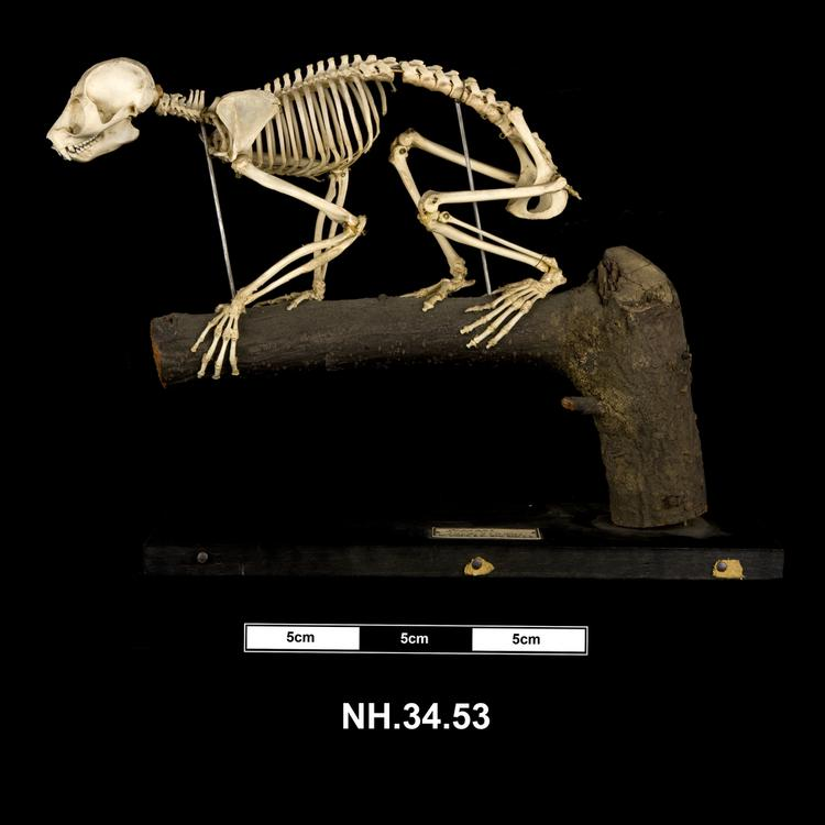 Lateral view from left of whole of Horniman Museum object no NH.34.53