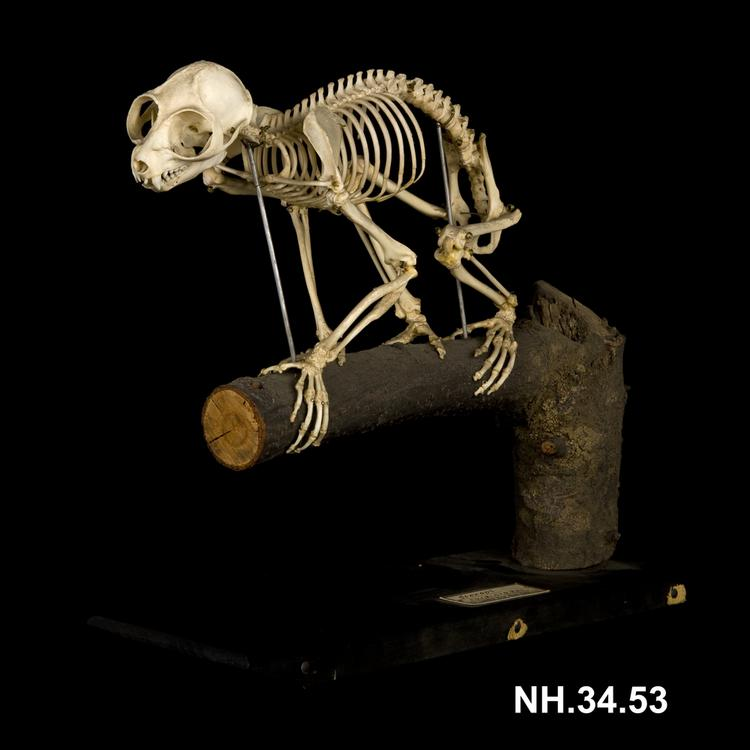 Lateral oblique view of whole of Horniman Museum object no NH.34.53