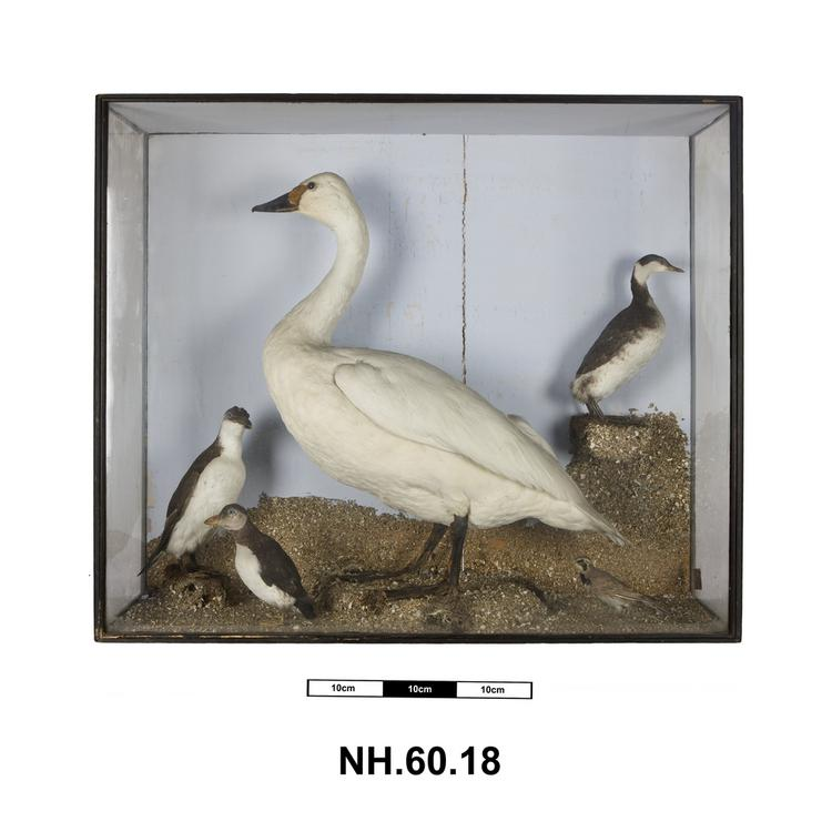 General view of whole of Horniman Museum object no NH.60.18