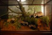 General view of whole of Horniman Museum object no NH.39.77