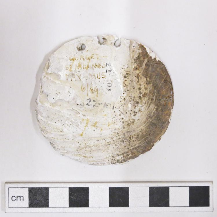 General view of whole of Horniman Museum object no 22.101