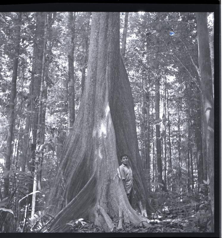 Black and white medium format negative of man standing at base of a huge tree