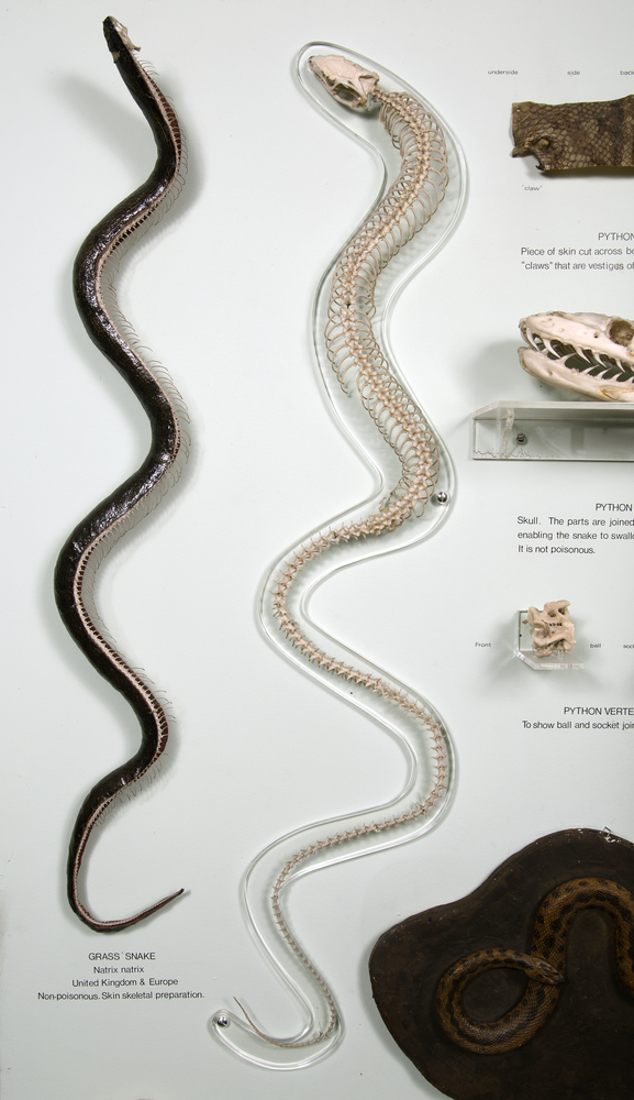 Top view of whole of Horniman Museum object no NH.11.87