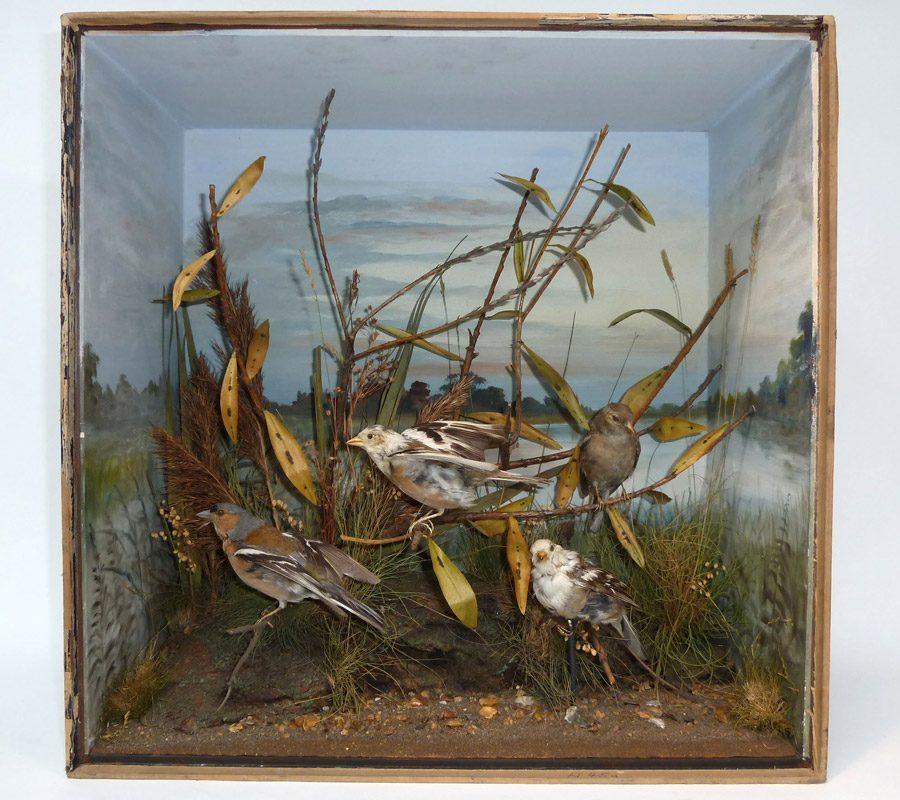 A taxidermy diorama of birds