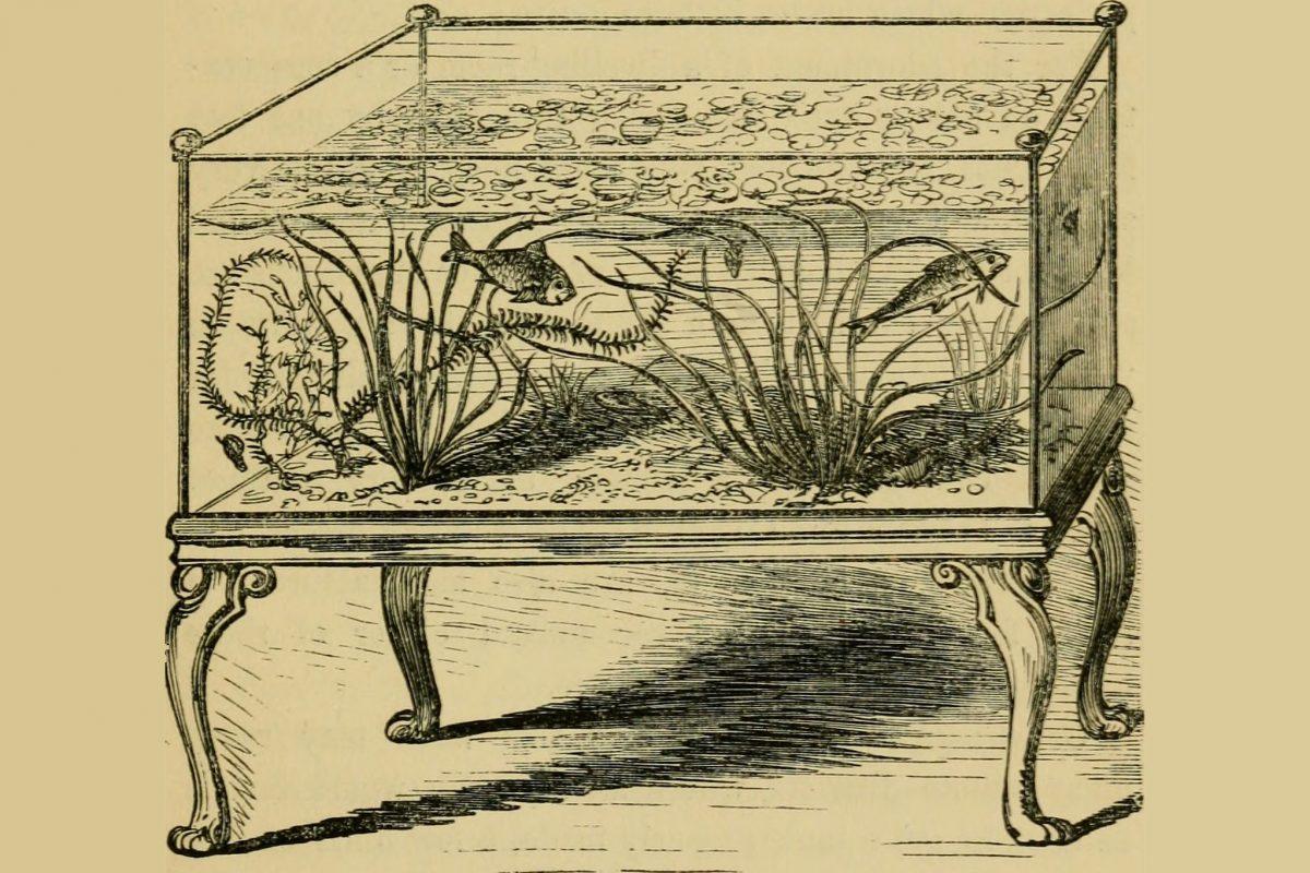 An illustration of an aquarium tank
