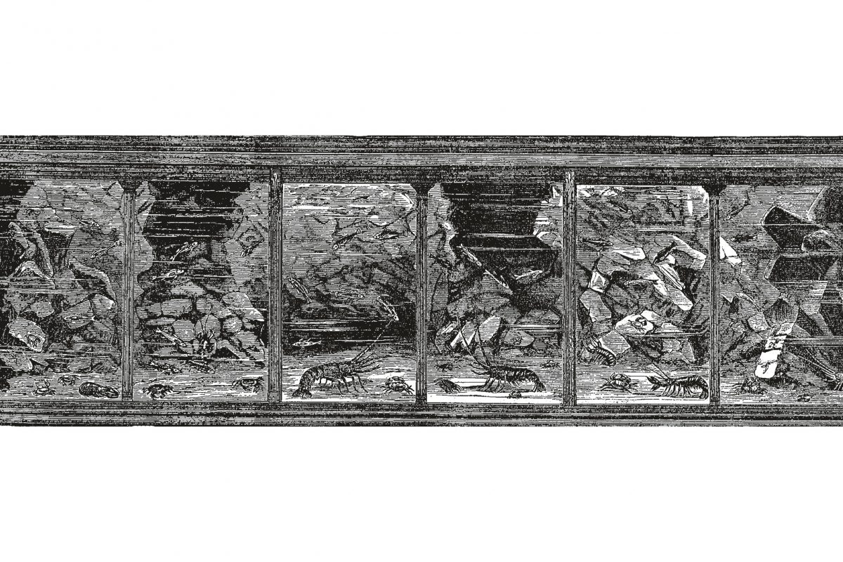 A black and white drawing of an aquarium tank