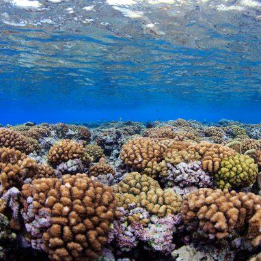 Coral reef in ocean.