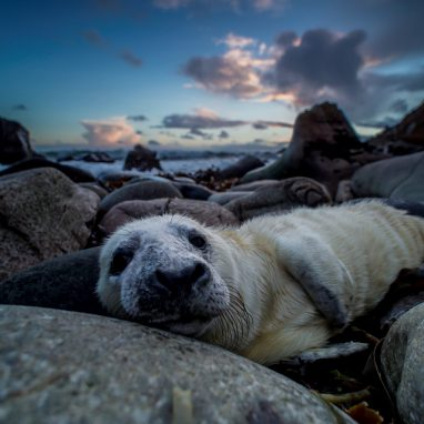 Seals laying on rocks as sky is nearly set