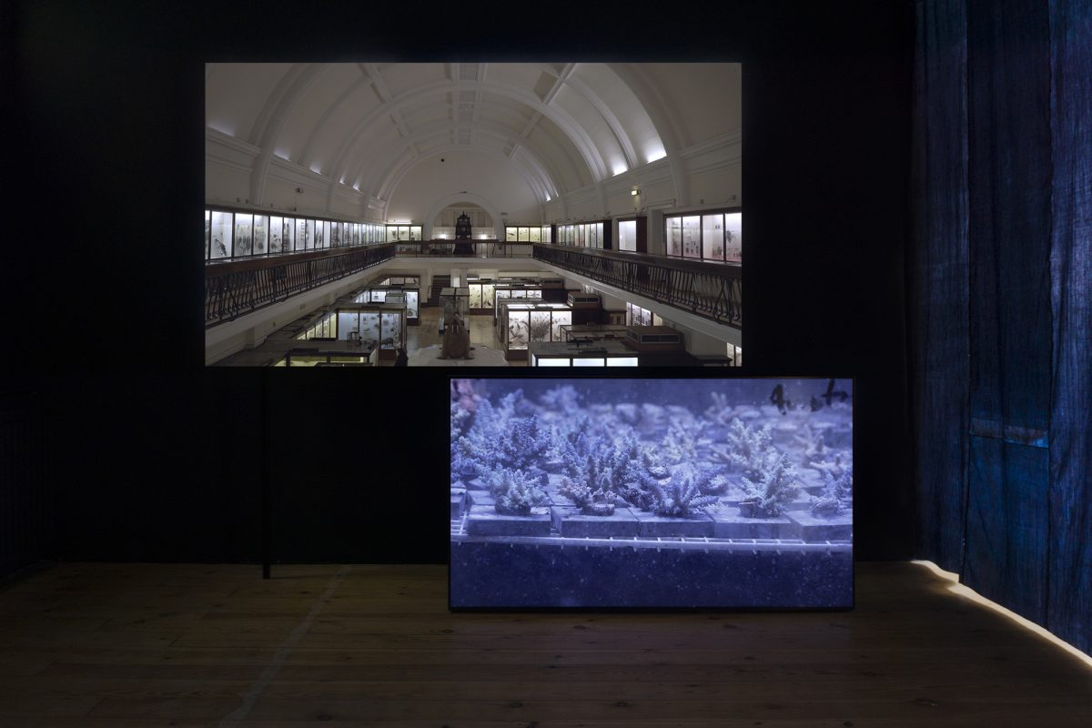 two screens, one displaying the Museum, the other coral