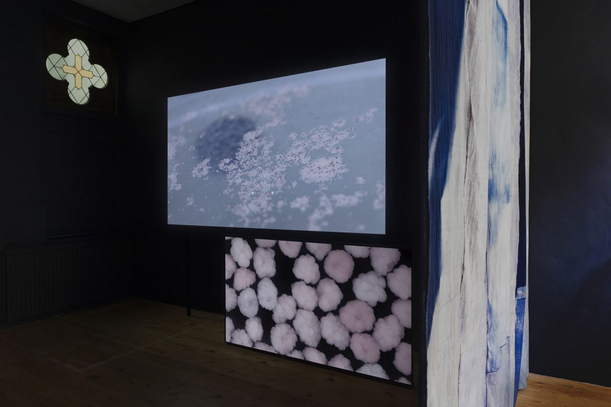 Two screens displaying corals in room.