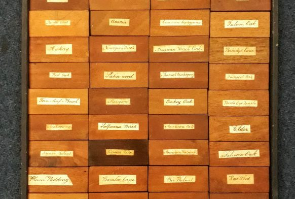 A square made up of dozens of samples of different woods, all with a small yellowing label on the middle of each