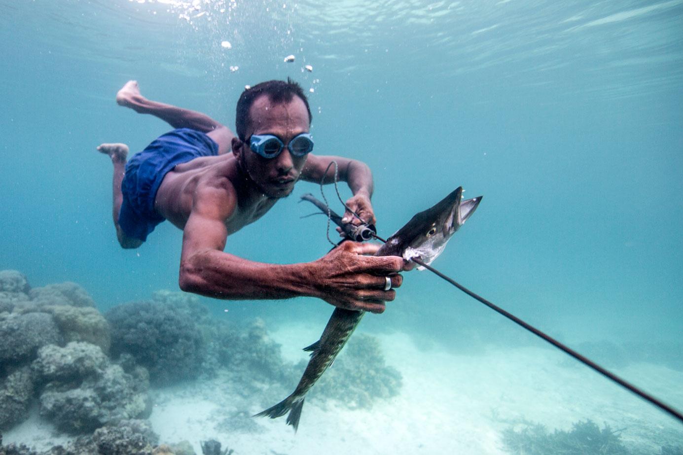 Man in sea harpooning a fish