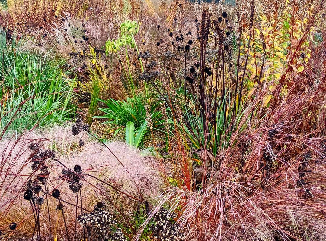 Different grasses and seedheads up close showing green, yellow, pink, red and brown colours