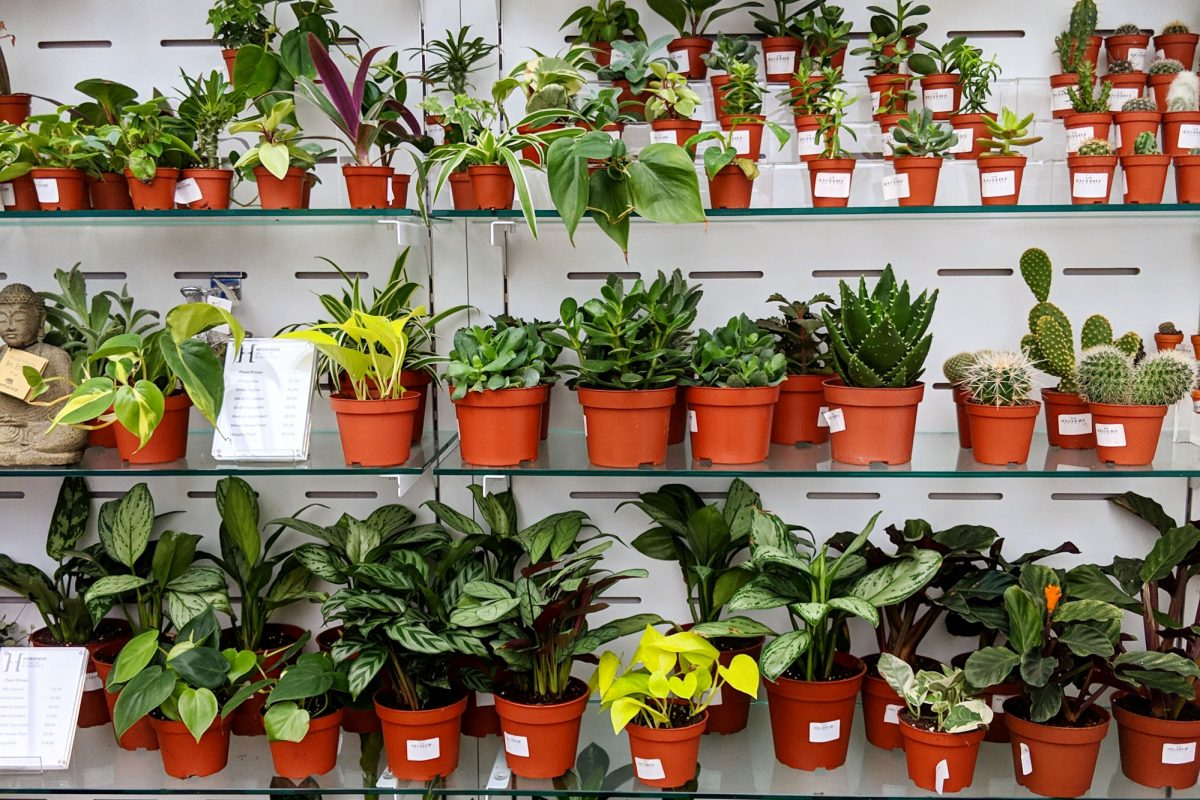 A wall of shelves is seen front on, with plants from tiny to larger arranged in size order, with smaller plants at the top.