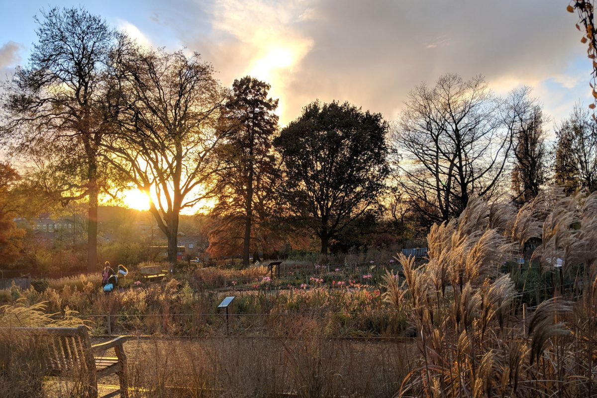 The sun sets over a Garden, illuminating the grasses and plants with sunlight, which is shining through some trees. The sky is blue, gold and white with clouds.
