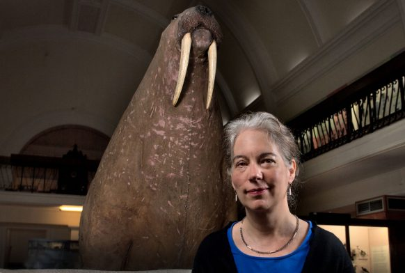 A woman is stood in front of a large taxidermy walrus in a gallery. She is seen from the shoulders up, wearing a back top over a blue one. She is looking into the camera.