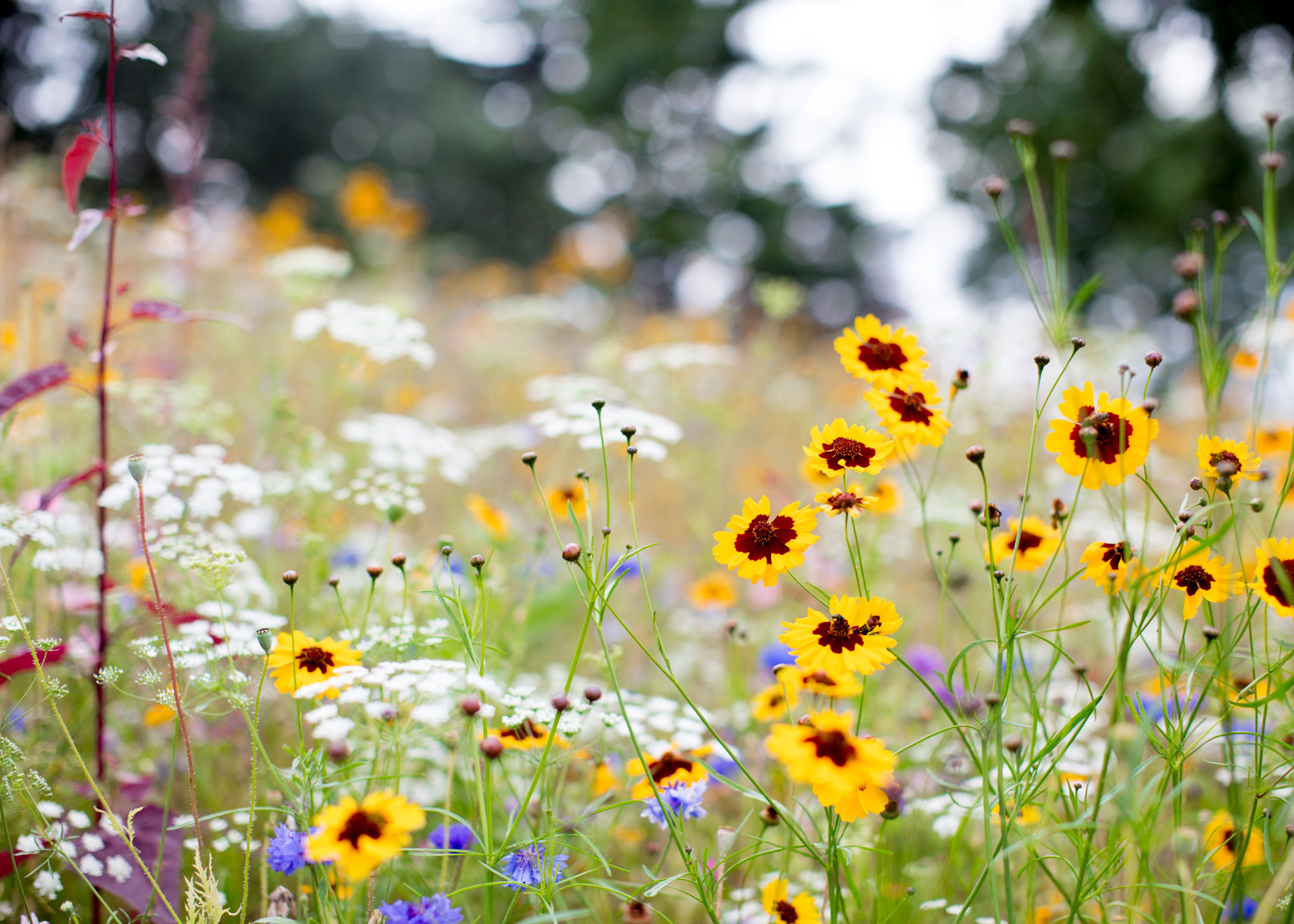 A close up of a meadow with yellow white and red flowers growing, looking wild and unmanaged.