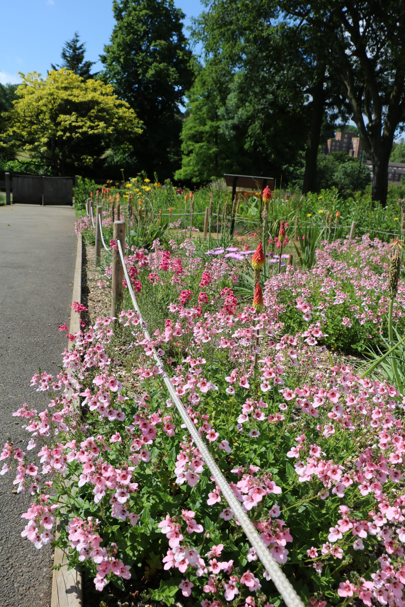 A path runs alongside a flowerbed to the left, while pink flowers spike up and spreadout from the bed onto the path. Trees are in the background