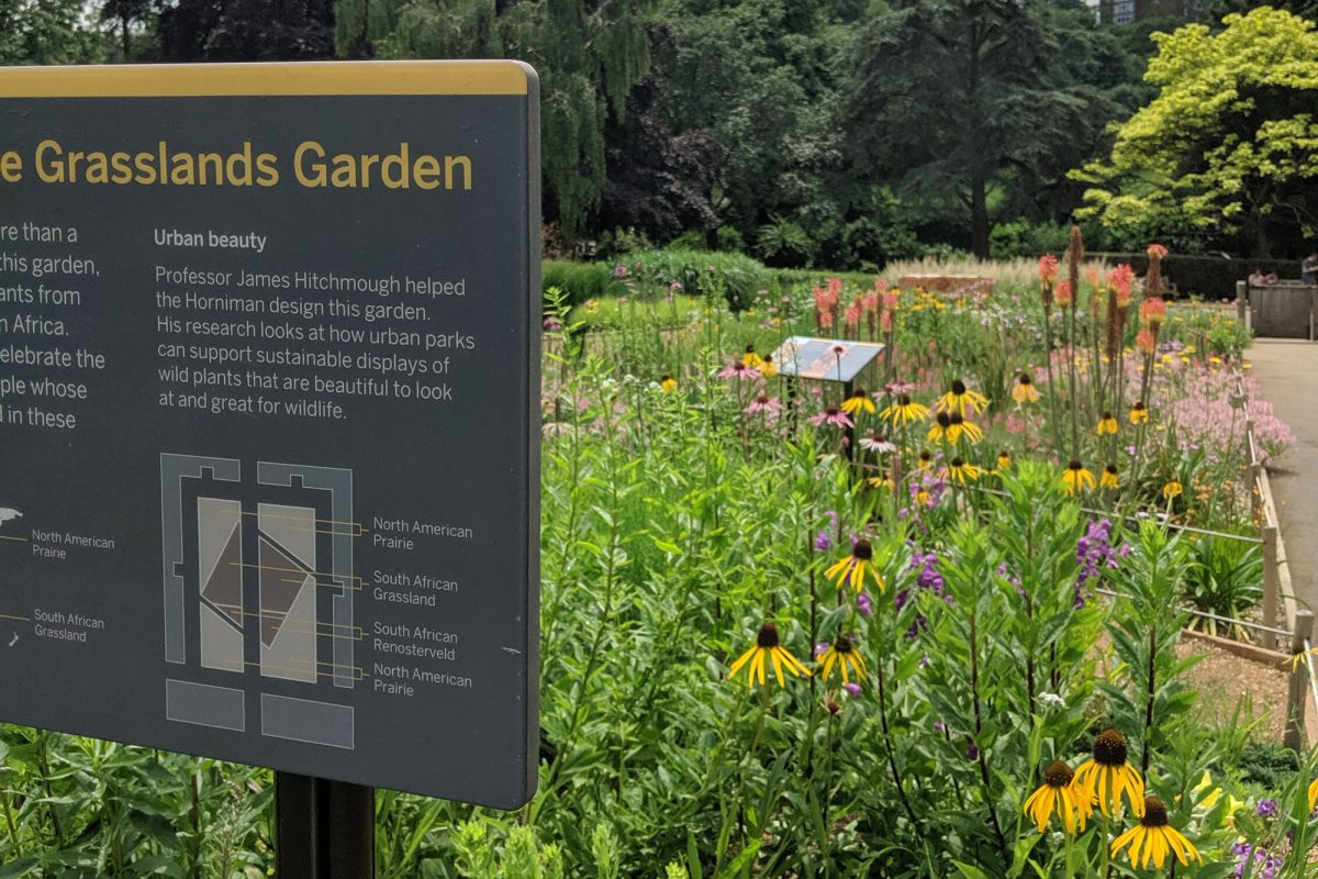 A board reading Grasslands Garden, with a map and more detailed information on it (eligible to the camera). Behind streatches out a lush green flower bed with yellow cone shaped flowers and some trees in the distance. the sky is cloudy
