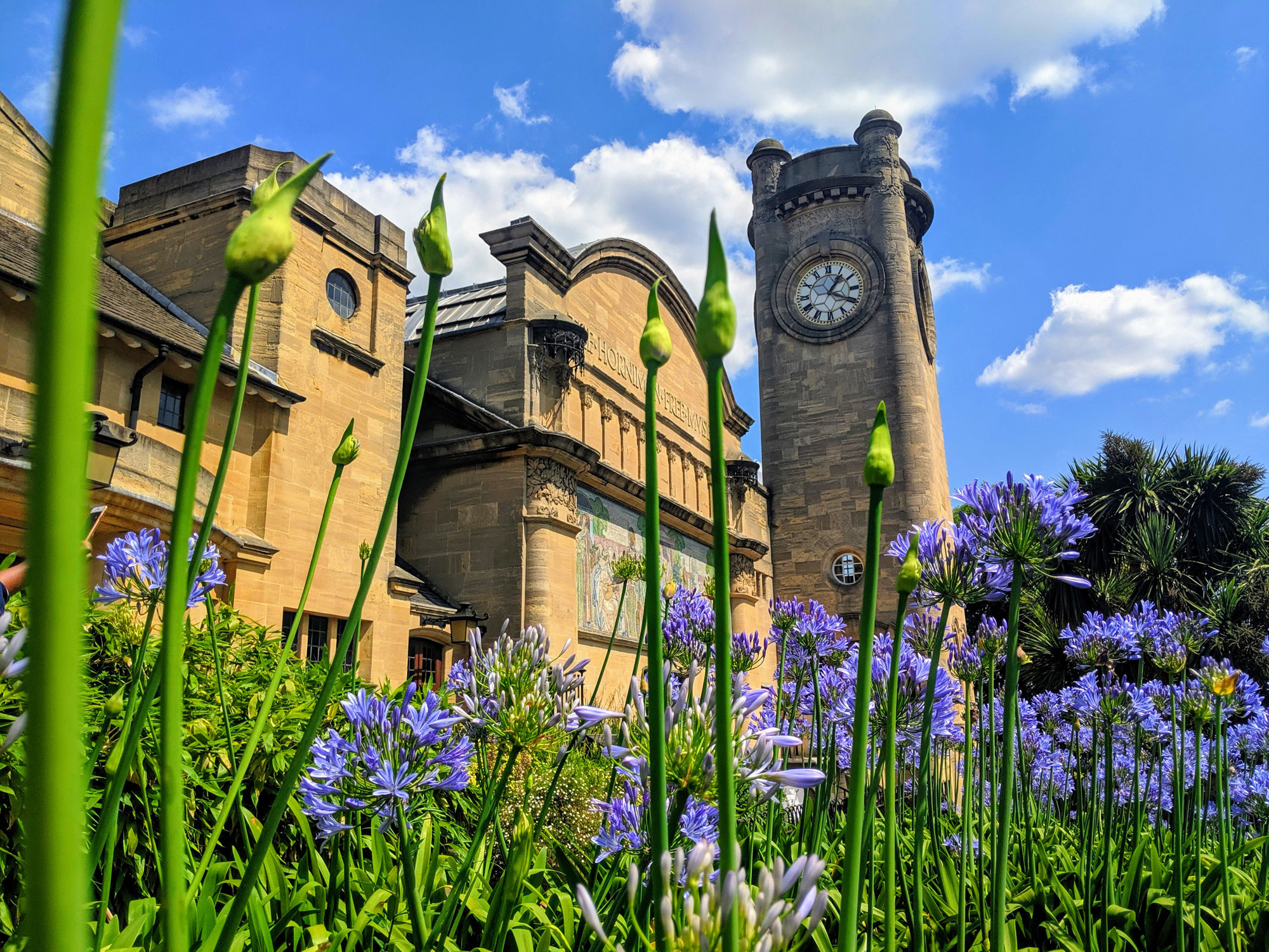 A pictures of the Horniman seen behind plants.