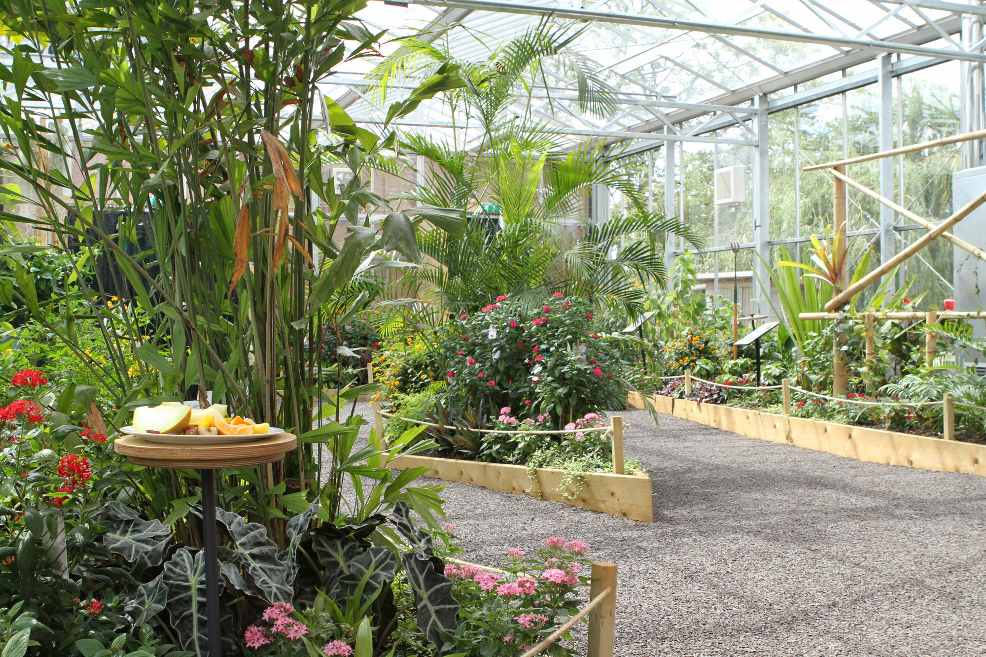 A flower bed to the left with a path to the right in a glass house.