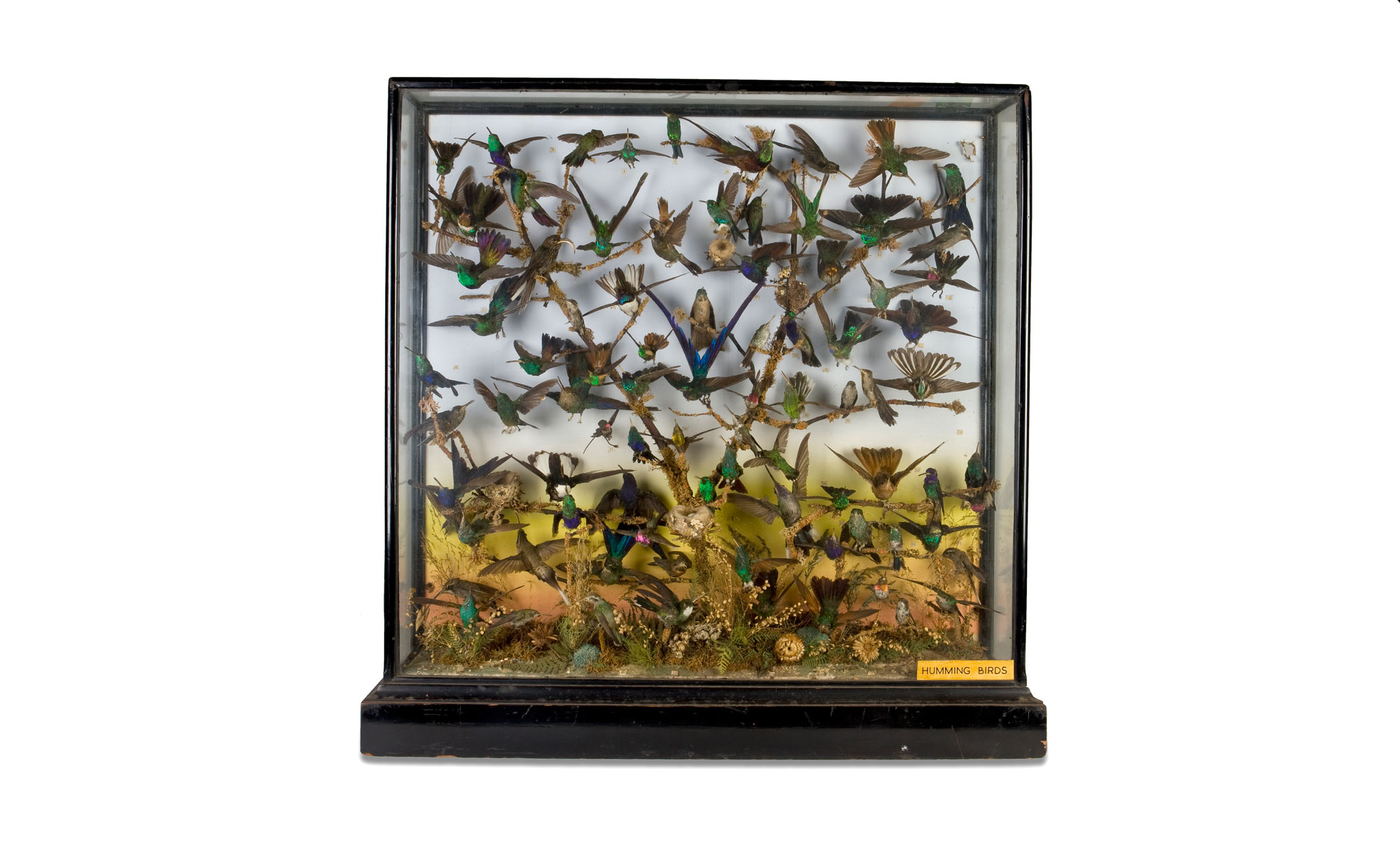 A square case full of taxidermy hummingbirds of many different colours, as if they had all swarmed together