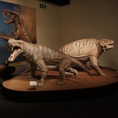 Two large models of synapsids