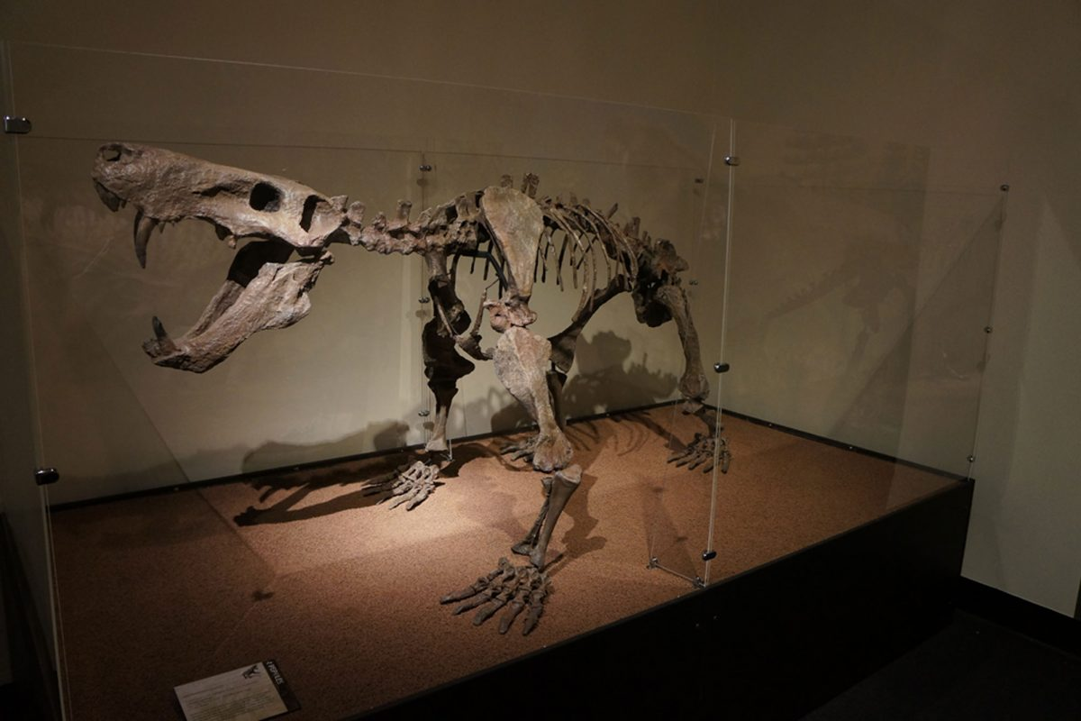 A skeleton of a synapsid