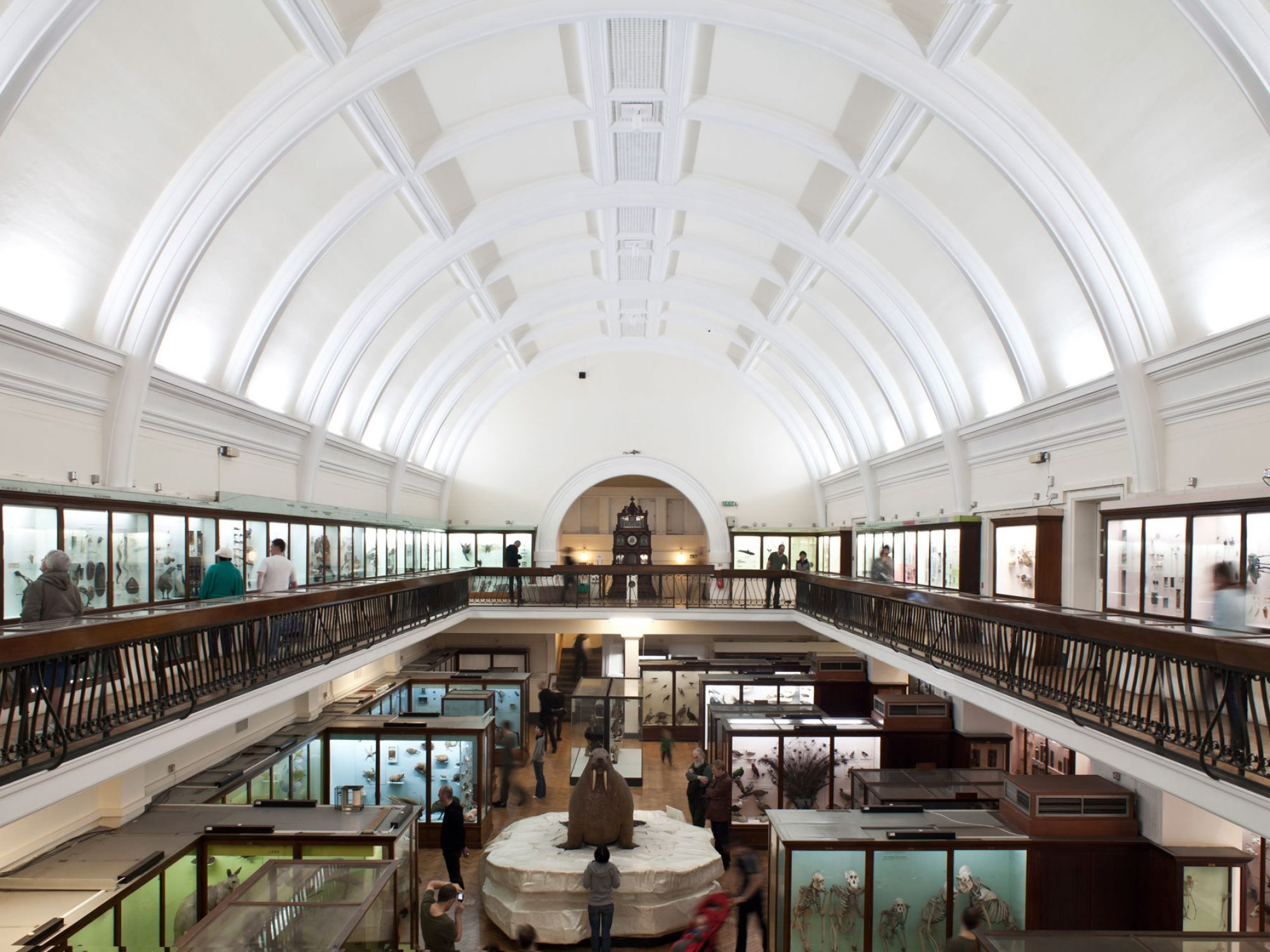 A gallery seen from a balcony above it. The balcony and the gallery below are full of colourful cases of taxidermy animals. The roof is a white arch and there are no windows. There is a metal rail around the balcony.