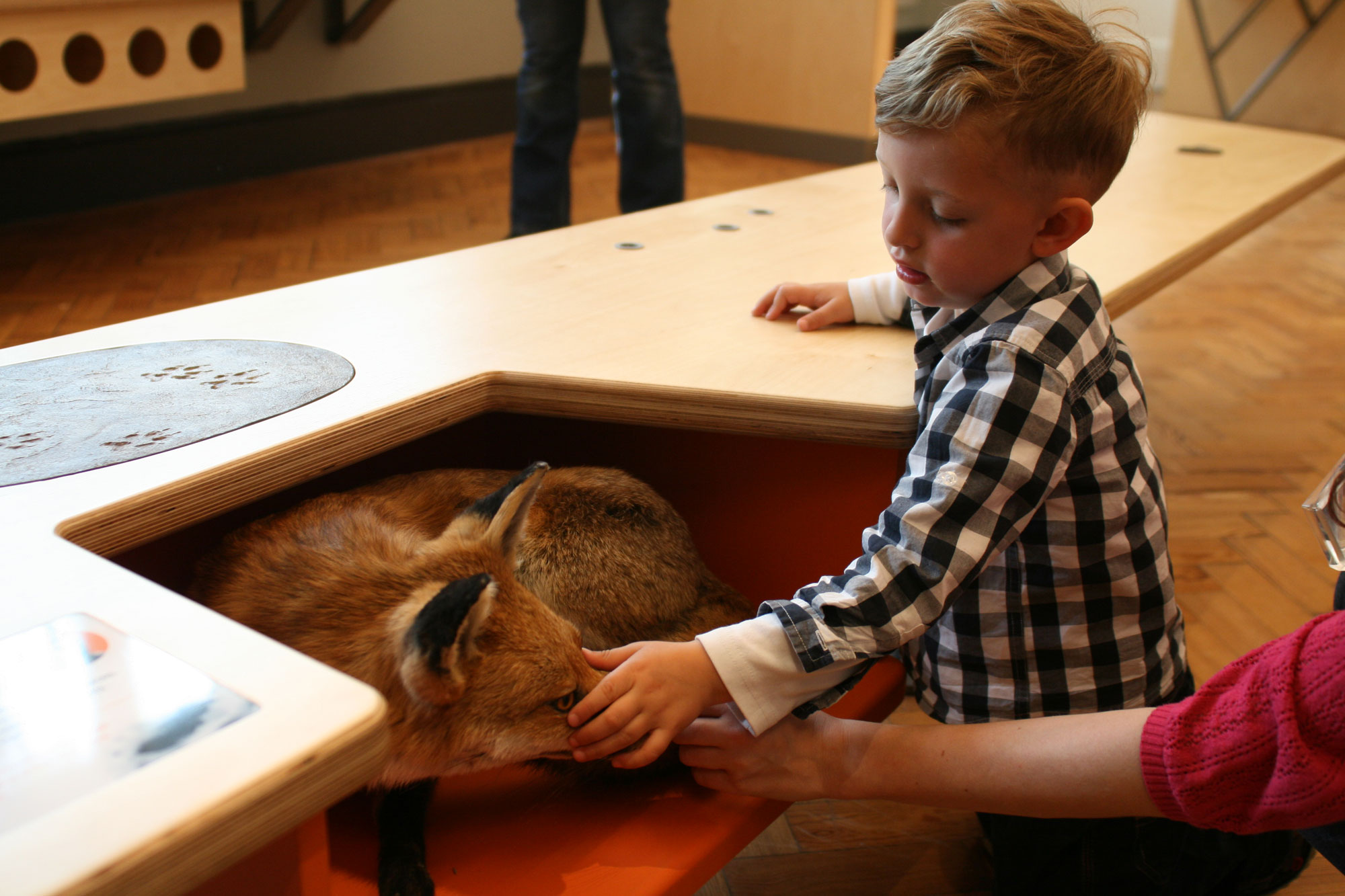 A boy is touching a taxidermy foxes nose, and an adult hand is reaching past them to join in. They are next to a wooden bench