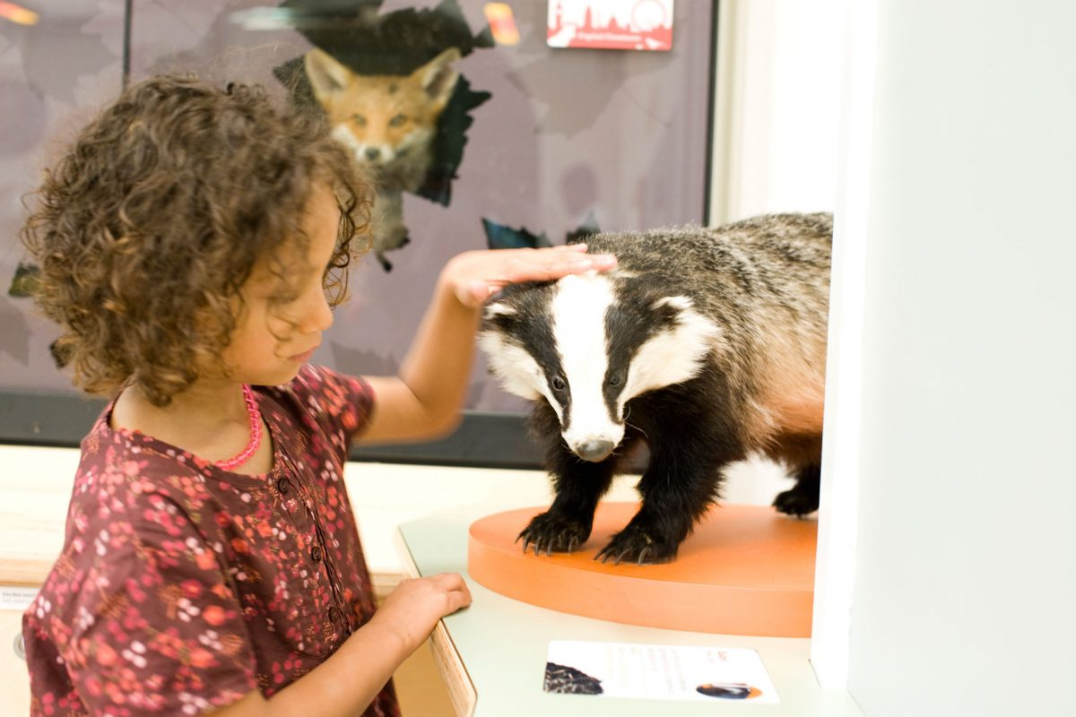 A young girl is stroking the head of a stuffed badger on a plinth