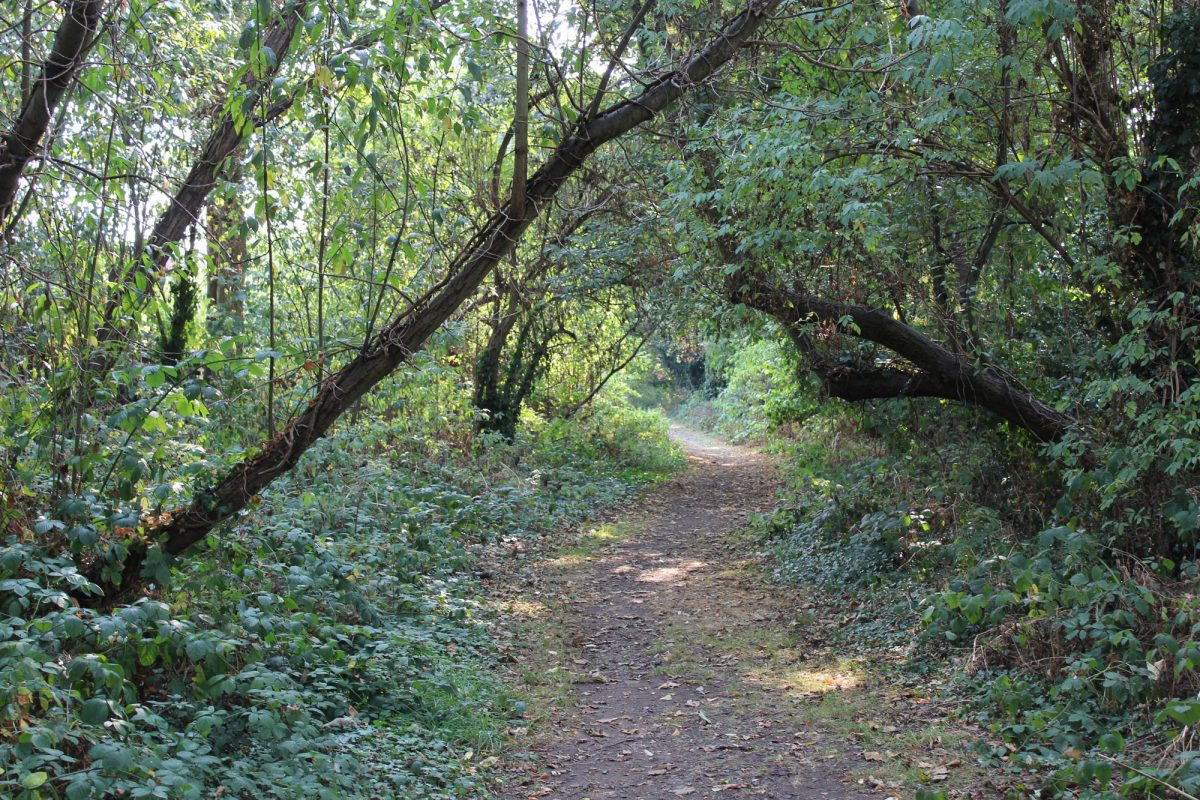 An unpaved path runs through trees and plants which overhang the path, creating a tree tunnel