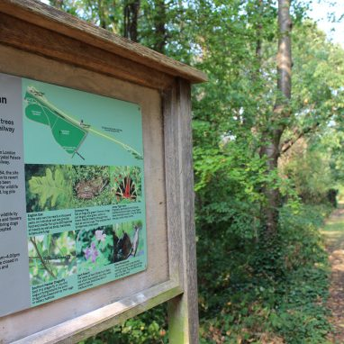 A board showing a map and pictures of animals that are found in the surrounding area. Behind the board stretching into the distance is a green path, overhung with trees and bushes.
