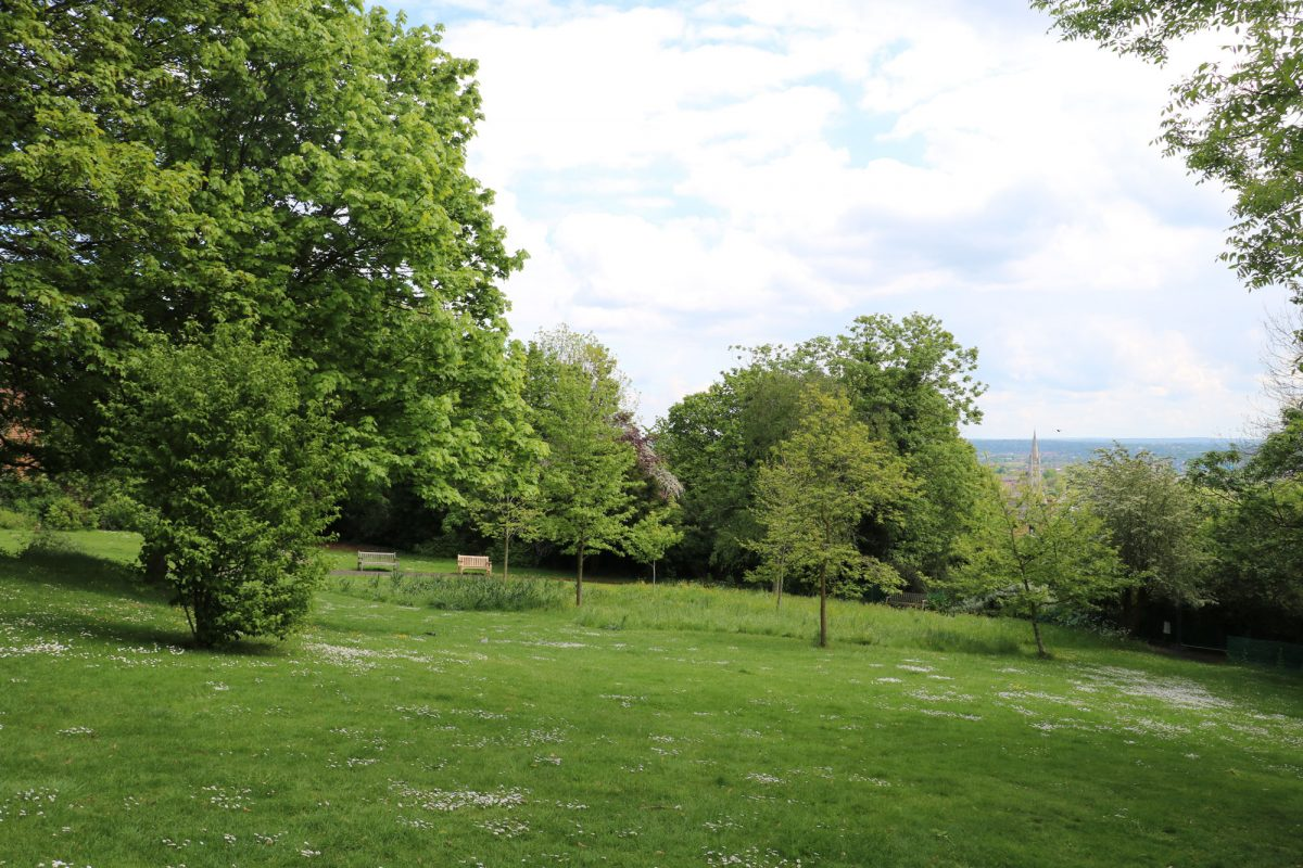 Green grass slope with trees