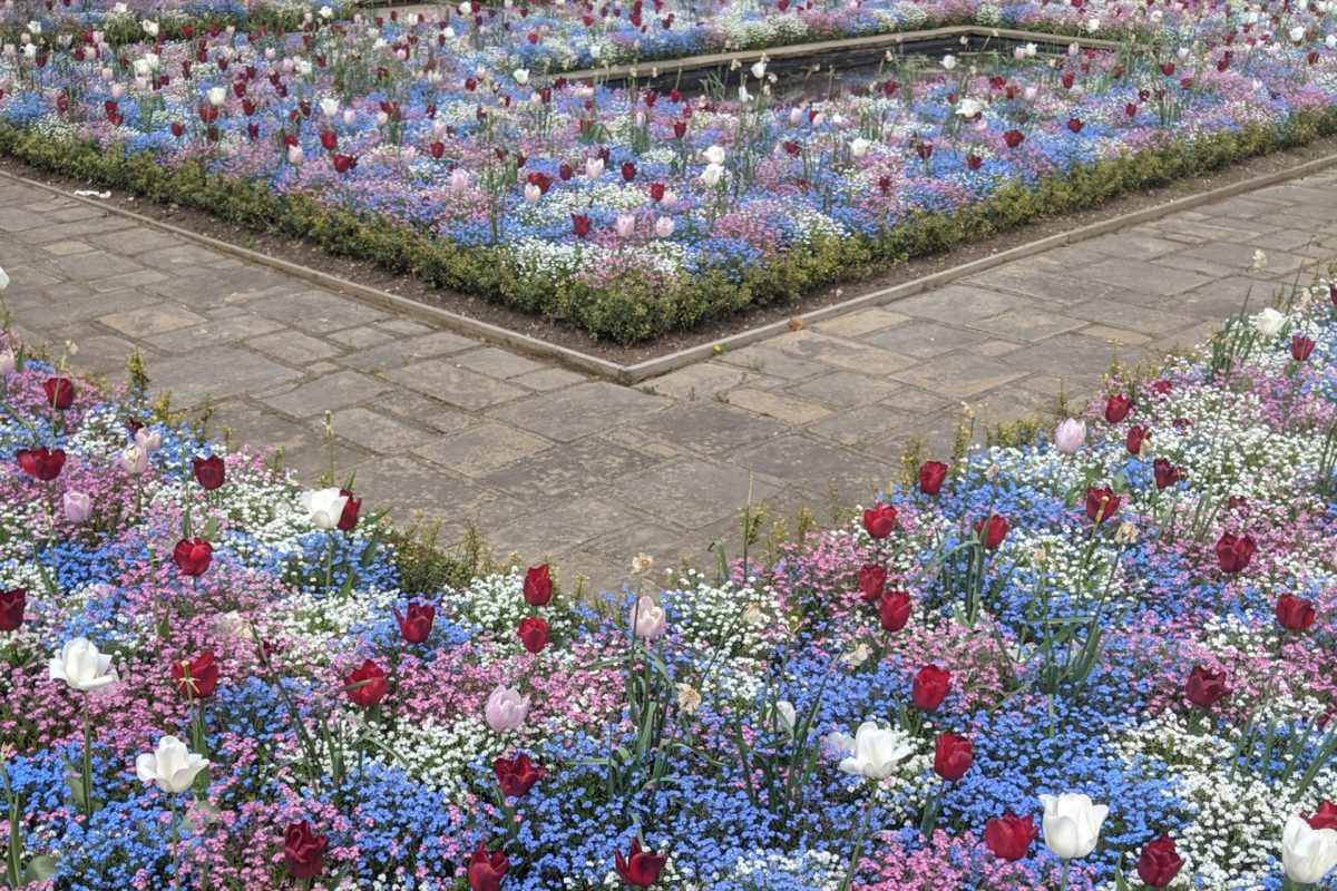 Two flower beds filled with blue, white, pink and red flowers, with a path running through them, and a pond behind them.
