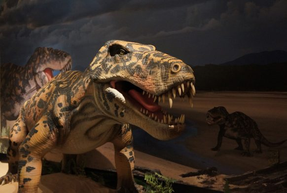 A model of a synapsid