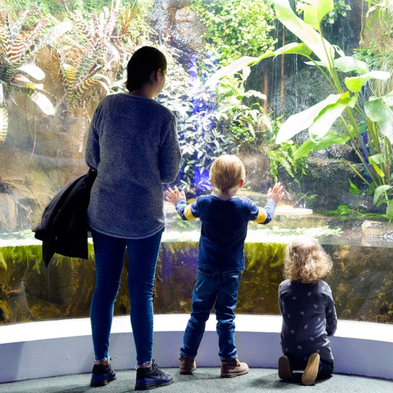 A woman and two children are stood with their backs to the camera and facing a large floor to ceiling tank, part filled with water and a tropical environment