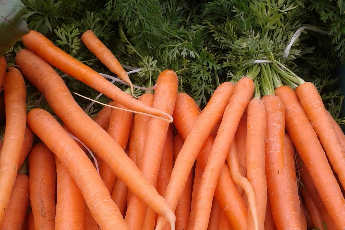A pile of carrots with their green stalks attached - they are tied together in bunches