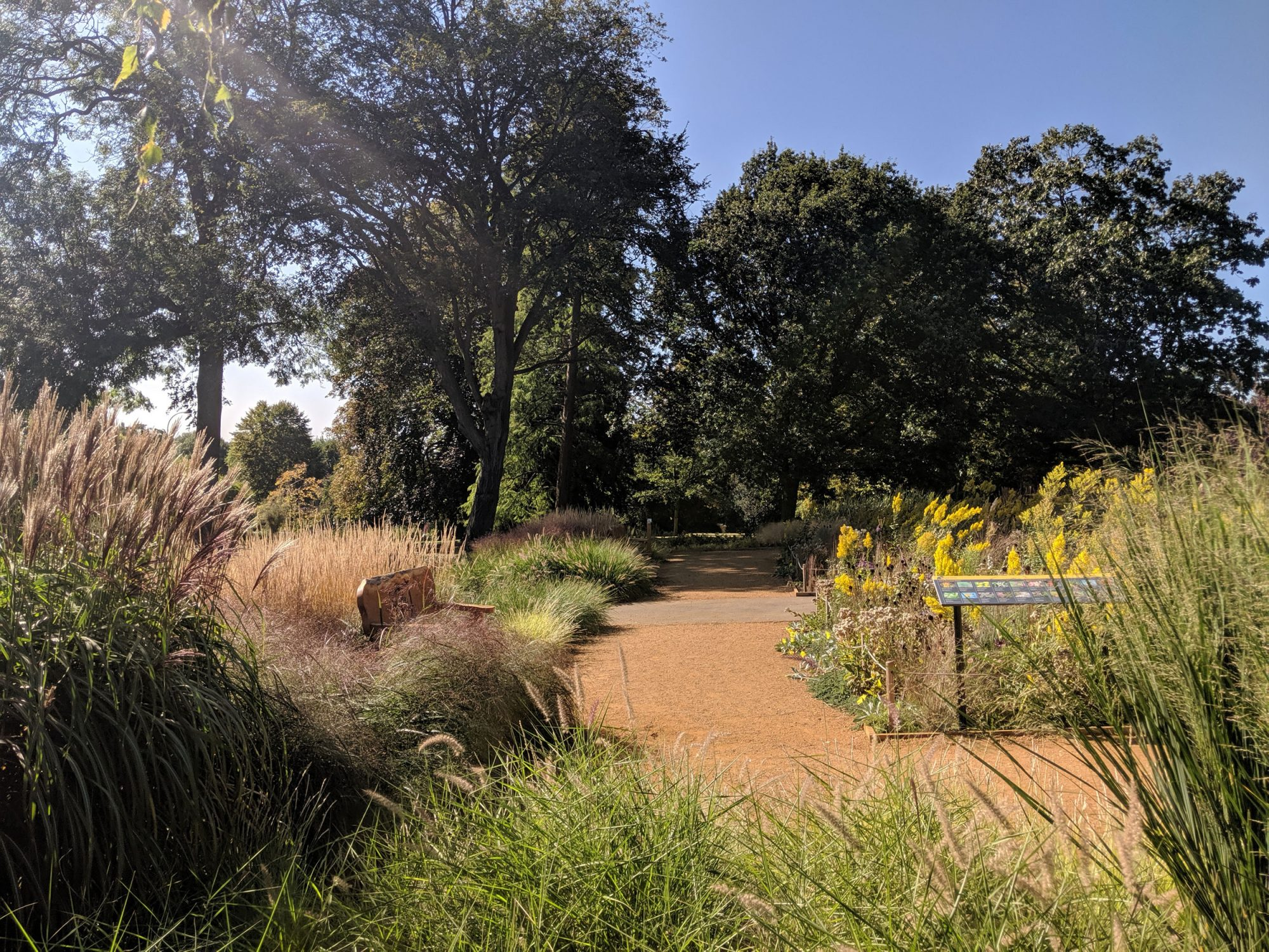 A wild and grassy garden on a sunny day. There is a bench to the left of a dirt path that runs through it. Trees are in the background and the sky is blue.