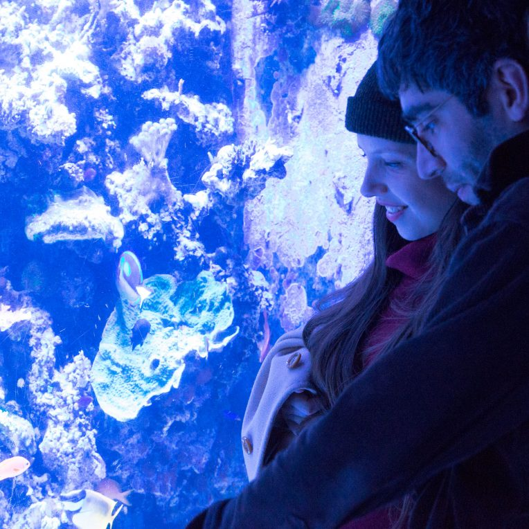 Three people are seen side on looking into a big blue tank with corals and fishes