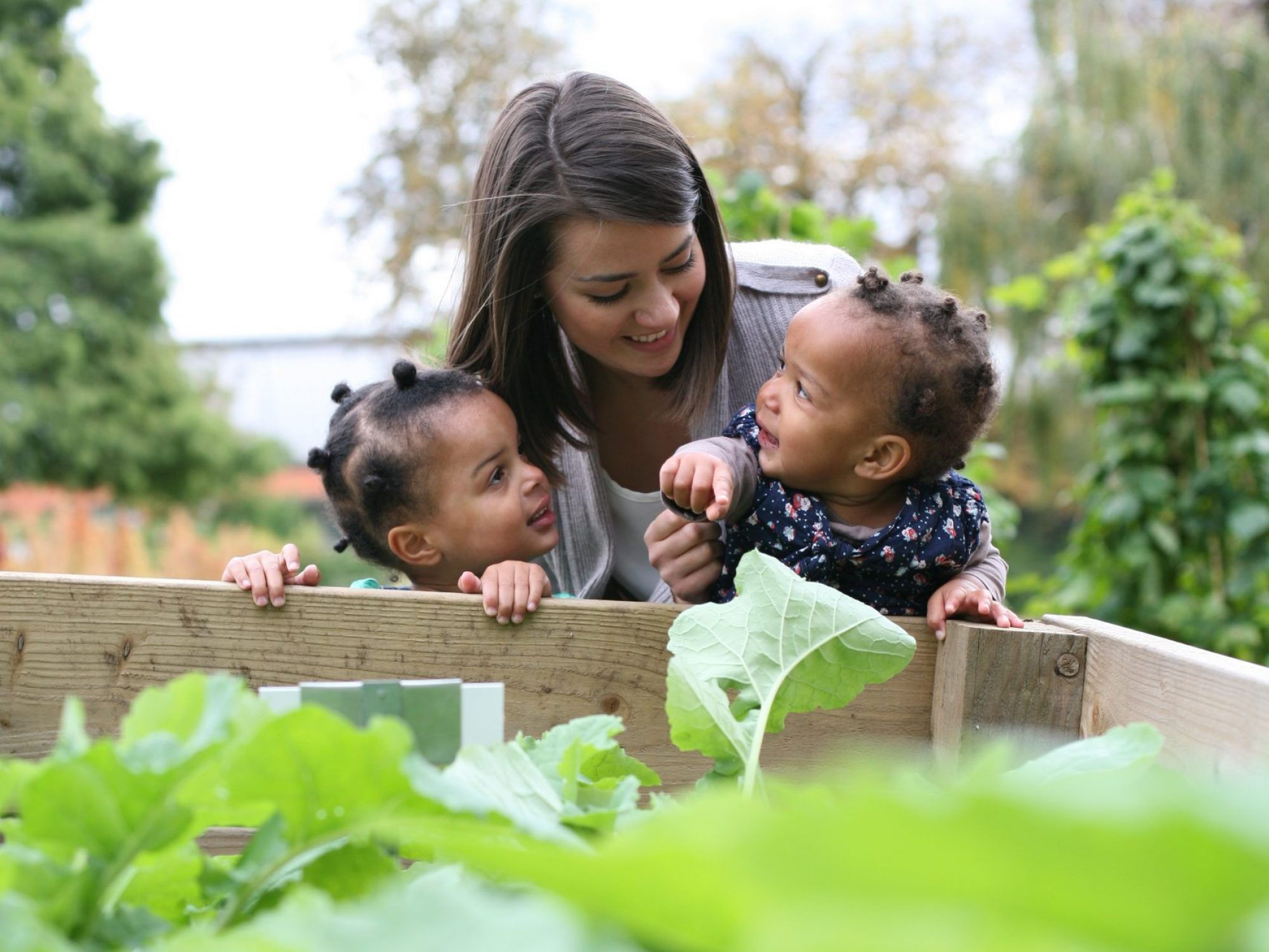 A woman and two small children are looking over a wooden edge of a flower bed towards large green leafy plants, in a Garden.