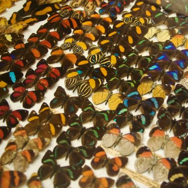 A draw packed full of butterflies of different colours