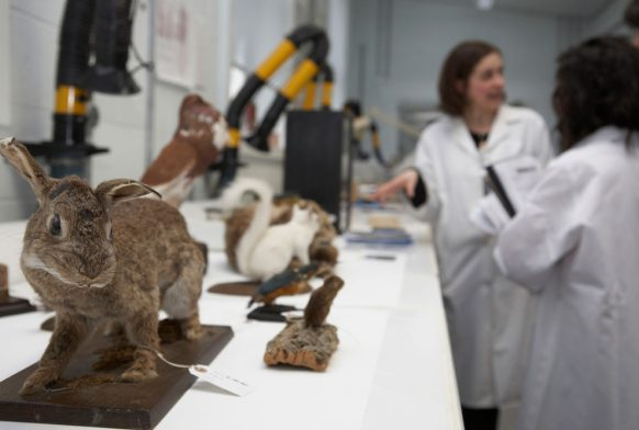 Two people in white lab coats are talking at the end of a work bench, at the far end of the image. Closer to the camera are some taxidermy animals like a rabbit and a white squirrel.