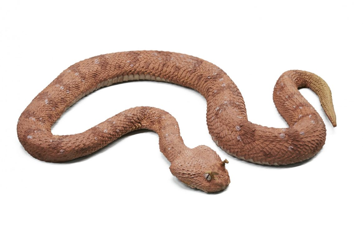 Brown snake on white background
