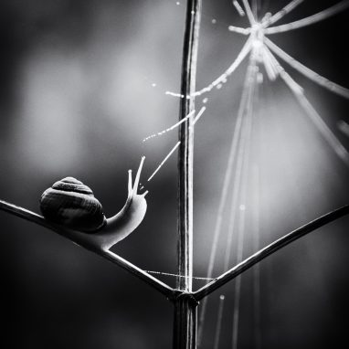 Black and white image of snail and web